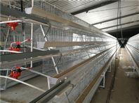 蛋鸡笼养设备 全自动笼养蛋鸡设备厂家批发