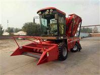 专业自走式的玉米青储饲料收获机