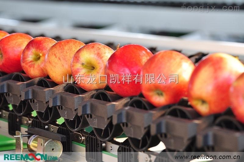 多功能白水蘋果選果機