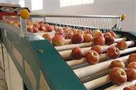 烟台苹果选果机 苹果分选机 重量分级机