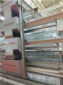 全自动化养鸡设备  三层五门蛋鸡笼
