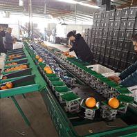 重庆不知火分选分级 全自动脐橙重量分选机