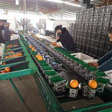 XGJ-SZ-1重庆不知火分选分级 全自动脐橙重量分选机