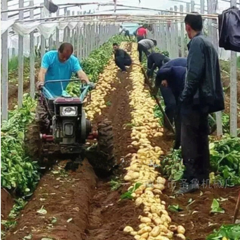 陝西榆林農用馬鈴薯收獲機廠家