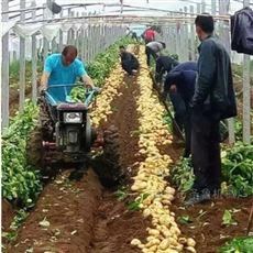 SL SHJ陕西榆林农用马铃薯收获机厂家
