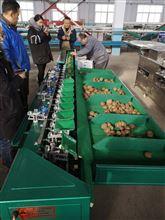 浙江猕猴桃重量分选,火龙果重量分选设备