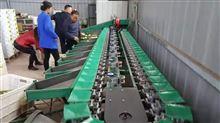 XGJ-NM柠檬分选机-厂家直销的大柠檬选果设备
