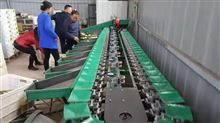 XGJ-MZ山东凯祥蜜枣重量分选机,分选蜜枣大小等级的好机器