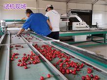 6xy-2烟台樱桃预冷分选机 樱桃产后处理好帮手