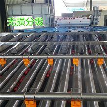 6xy-2凯祥公司自主研发水洗式樱桃分选机
