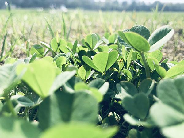 2019年中国国际农业机械展览会设立专区 助力农村人居环境改善与美丽乡村建设