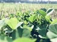 山西省关于恢复连云港连发、河北圣和有关补贴产品资格的通知