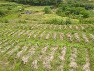 第48个世界环境日宣言:做绿色★农业践行者