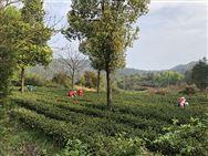 """农业农村部发布72项农业主推技术,这几类小众千赢国际城可能要""""火"""""""
