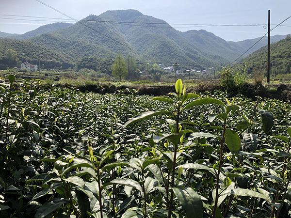 江西省农业农村厅彩宝彩票网站娱乐化处关于撤销部分植保机械投档结果的公告