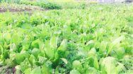贵州省下达近1000万元专项资金支持化肥减量增效,重点选择辣椒和百香果及特色水果
