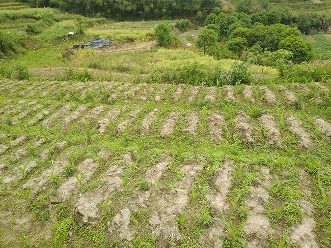 """對丘陵山區農業機械化的探索——重慶農田""""宜機化""""改造效果顯著"""