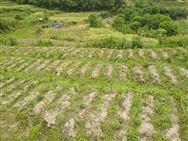 """对丘陵山区农业机械化的探索——重庆农田""""宜机化""""改造效果显著"""