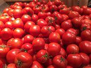 第二十二届中国农苹果彩票加工投洽会签约总额821亿元