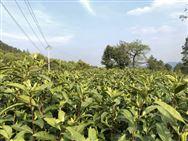 11部门联合印发指导意见部署实施家庭农场培育计划