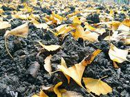 盛会将启丨2019第四届中国国际土壤与地下水高峰论坛11月上海开幕提前剧透