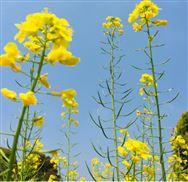 重庆市关于拨付2019年度农机化技术试验示范现场活动奖励补助的通知