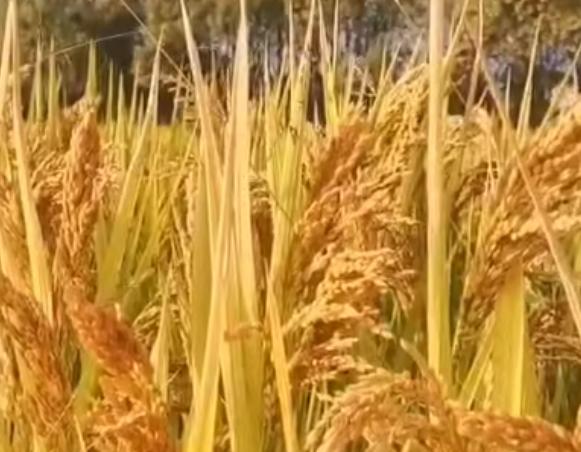 四川省找准短板、强化措施,扎实推进农村人居环境整治工作