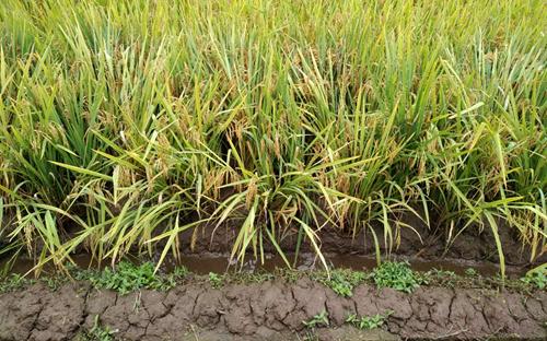 首届中非农业合作论坛在三亚召开