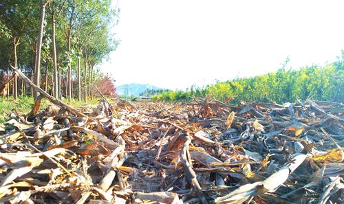 甘肃省将提前下达2020年农业资源及生态保护补助转移支付资金3443万元