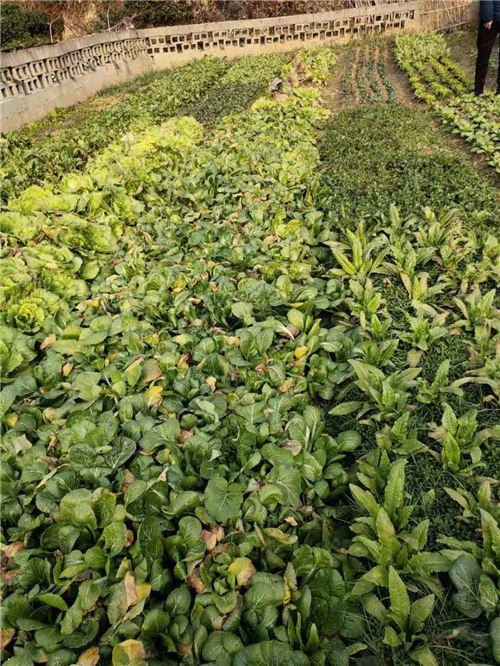 贵州省关于统筹做好新型冠状病毒感染的肺炎疫情防控期间春耕农机生产工作的通知