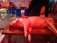 """山西太原全面加快生猪产业规模健康绿色发展,保障""""菜篮子""""稳定供应"""