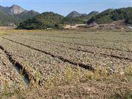 春耕備耕熱潮到來,保護性耕作這一可持續農業技術蔚然成風