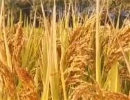 湖南省农作物秸秆资源利用模式