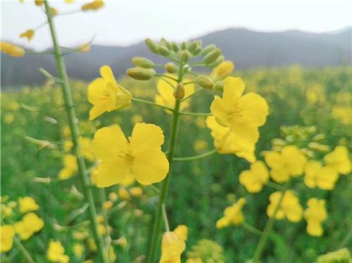 江苏省关于暂停部分农机生产企业补贴资格的通知