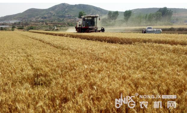 【手中有粮 心中不慌】全国小麦机收大规模展开,盼丰收!